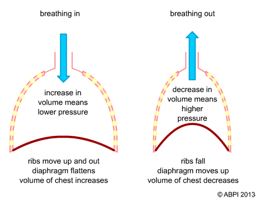 Lung Ventilation System : The mechanics mechanical ventilation